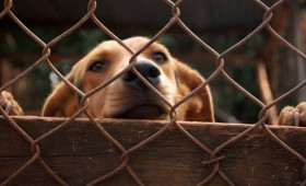Adopting a new dog can be one of life's most rewarding pleasures. You are bringing in a new member into the household and watching as […]