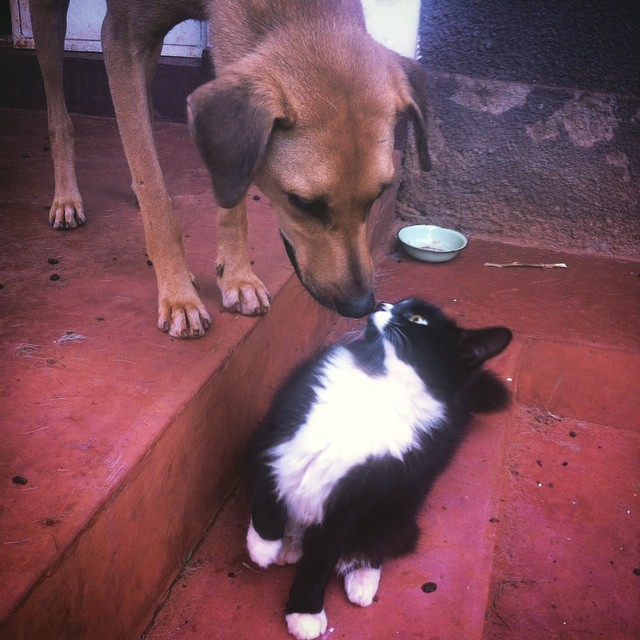 Cat meets dog. Cat remains unconvinced #USPCA #Uganda #dogs #cats #cute