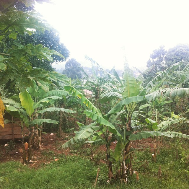Even in the city it can feel like the village #Kampala #beautiful #Uganda