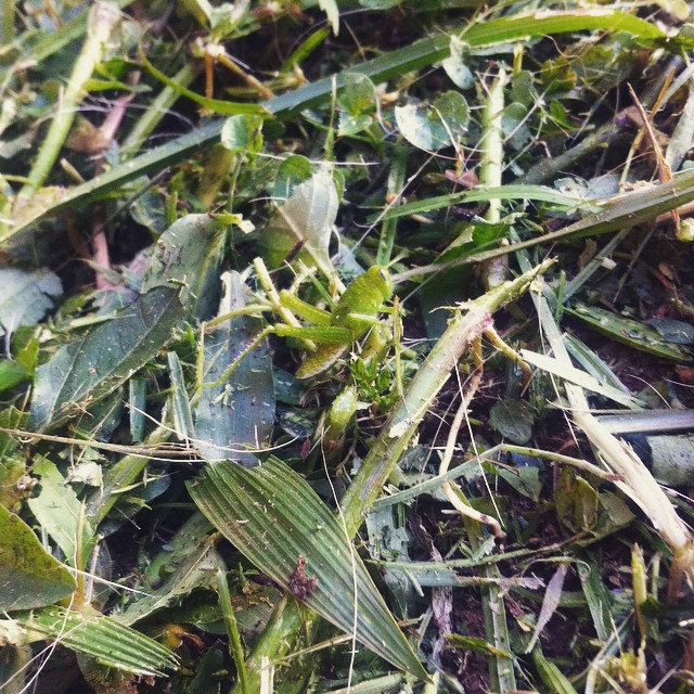 Can you spot the grasshopper? #tistheseason #kampala